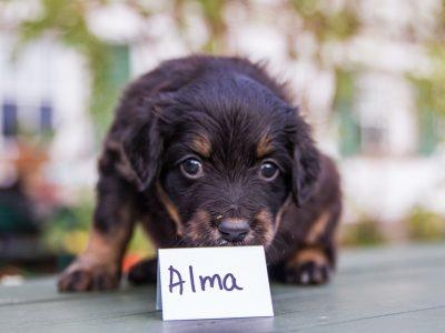Alma1