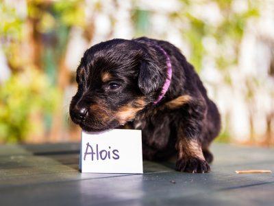 Alois2