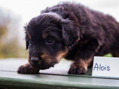 Alois3