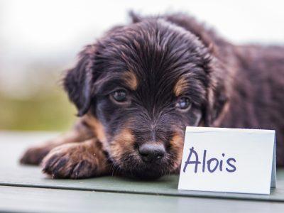 Alois5
