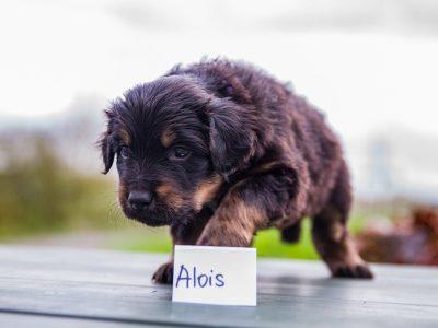 Alois6