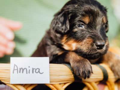 Amira1