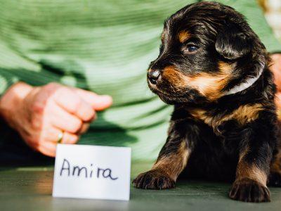 Amira4