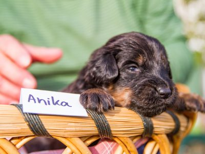 Anika4
