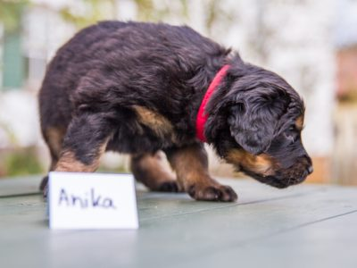 Anika5