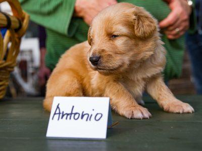 Antonio2